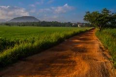 Πορεία μεταξύ των τομέων ρυζιού στη Σρι Λάνκα, στο βουνό υποβάθρου Στοκ Εικόνες