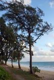 Πορεία με τα δέντρα Ironwood που ευθυγραμμίζονται με τις χλόες κατά μήκος της ακτής Στοκ εικόνες με δικαίωμα ελεύθερης χρήσης