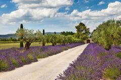 Πορεία με lavender στην Προβηγκία στοκ εικόνες