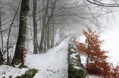 Πορεία πάγου στη μέση του κρύου χιονώδους δάσους το χειμώνα Στοκ Εικόνα