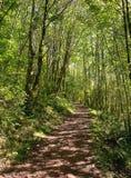 Πορεία πέρα από το δάσος στις αστουρίες, Ισπανία στοκ φωτογραφίες