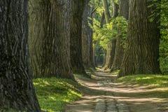 Πορεία παραμυθιού σε ένα δάσος με τον ήλιο που λάμπει κατευθείαν Στοκ Φωτογραφίες