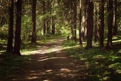 Πορεία παρόδων διάβασης πεζών με τα πράσινα δέντρα στο δάσος Στοκ φωτογραφίες με δικαίωμα ελεύθερης χρήσης