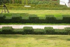 Πορεία παρόδων με τα πράσινους δέντρα και τους Μπους στον κήπο Στοκ Εικόνες