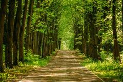 Πορεία παρόδων διάβασης πεζών με τα πράσινα δέντρα στο δασικό δρόμο διαβάσεων κατευθείαν Στοκ Φωτογραφίες