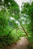 Πορεία παρόδων διάβασης πεζών στο δάσος Στοκ εικόνες με δικαίωμα ελεύθερης χρήσης