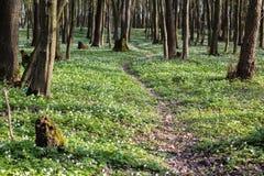 πορεία παρόδων στο πράσινο δασικό σύνολο άνοιξη Στοκ Φωτογραφίες
