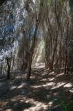 Πορεία πεζοπορίας μεταξύ του ξηρού θάμνου στον αυστραλιανό εσωτερικό στοκ φωτογραφία με δικαίωμα ελεύθερης χρήσης