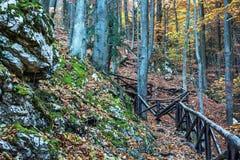 Πορεία πεζοπορίας με το κιγκλίδωμα στο αποβαλλόμενο δάσος φθινοπώρου Στοκ φωτογραφία με δικαίωμα ελεύθερης χρήσης