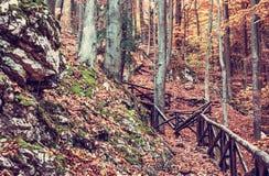 Πορεία πεζοπορίας με το κιγκλίδωμα στο δασικό, κόκκινο φίλτρο φθινοπώρου Στοκ Εικόνες