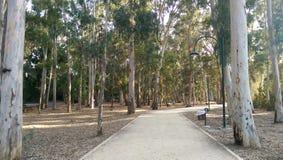Πορεία περιπάτων μέσω των φρέσκων δέντρων στοκ φωτογραφία