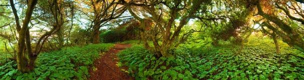 Πορεία περιπέτειας μέσω της αγριότητας Στοκ Εικόνες