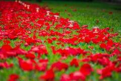 Πορεία πετάλων κεριών και τριαντάφυλλων Στοκ Εικόνες