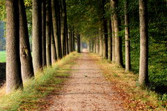 Πορεία που περιβάλλεται δασική με τα δέντρα βαλανιδιών Στοκ εικόνα με δικαίωμα ελεύθερης χρήσης