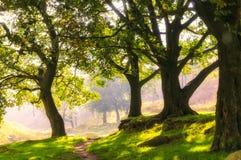 Πορεία που περνά μέσω των δέντρων που εξισώνουν το φως Στοκ Εικόνες