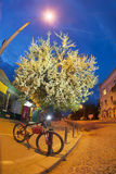 Πορεία ποδηλάτων ανθών της Apple Στοκ εικόνα με δικαίωμα ελεύθερης χρήσης