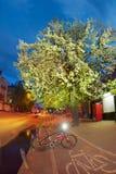 Πορεία ποδηλάτων ανθών της Apple Στοκ φωτογραφίες με δικαίωμα ελεύθερης χρήσης
