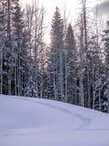 Πορεία πλεγμάτων σχήματος ρακέτας στο φρέσκο χιόνι Στοκ Φωτογραφία