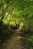 Πορεία σε ένα δάσος στις αστουρίες, Ισπανία στοκ εικόνες