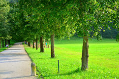 Πορεία σε ένα πάρκο μέσω ενός χορτοτάπητα Στοκ Εικόνες