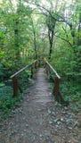 πορεία στα ξύλα, πού οδηγεί στοκ φωτογραφία