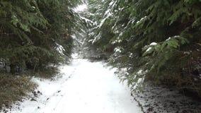 Πορεία στα ξύλα στο χιόνι απόθεμα βίντεο