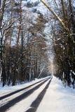 Πορεία στα ξύλα το χειμώνα Στοκ φωτογραφία με δικαίωμα ελεύθερης χρήσης