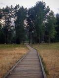 Πορεία στα ξύλα στοκ φωτογραφία
