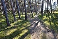 Πορεία στη δασική την άνοιξη ημέρα Στοκ εικόνα με δικαίωμα ελεύθερης χρήσης
