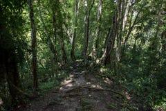 Πορεία στη ζούγκλα Γουατεμάλα, πάρκο Tikal στοκ εικόνα με δικαίωμα ελεύθερης χρήσης