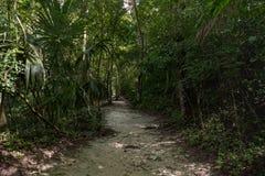 Πορεία στη ζούγκλα Γουατεμάλα, πάρκο Tikal στοκ φωτογραφία