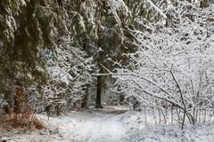 Πορεία στις δασικές χιονοπτώσεις κατόπιν Στοκ εικόνα με δικαίωμα ελεύθερης χρήσης