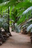 Πορεία στις ζούγκλες στοκ φωτογραφία με δικαίωμα ελεύθερης χρήσης