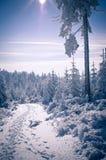 Πορεία στο δάσος κατά τη διάρκεια του χειμώνα Στοκ εικόνα με δικαίωμα ελεύθερης χρήσης