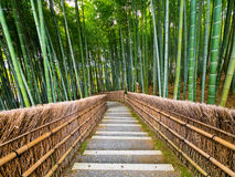 Πορεία στο δάσος μπαμπού, Arashiyama, Κιότο, Ιαπωνία Στοκ Φωτογραφίες