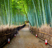 Πορεία στο δάσος μπαμπού, Arashiyama, Κιότο, Ιαπωνία Στοκ Εικόνα
