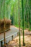 Πορεία στο δάσος μπαμπού, Arashiyama, Κιότο, Ιαπωνία Στοκ φωτογραφίες με δικαίωμα ελεύθερης χρήσης