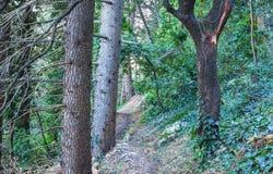 Πορεία στο δάσος το φθινόπωρο Στοκ Εικόνες