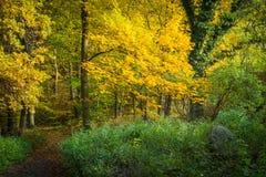 Πορεία στο δάσος φθινοπώρου με τα κίτρινα και πράσινα φύλλα Στοκ εικόνες με δικαίωμα ελεύθερης χρήσης