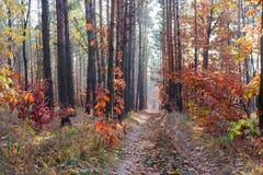 Πορεία στο δάσος φθινοπώρου Στοκ φωτογραφίες με δικαίωμα ελεύθερης χρήσης