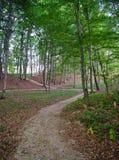 Πορεία στο δάσος Στοκ Εικόνες