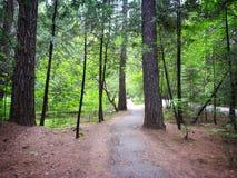Πορεία στο δάσος στοκ εικόνα με δικαίωμα ελεύθερης χρήσης