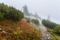 Πορεία στο βουνό με την ομίχλη Στοκ φωτογραφία με δικαίωμα ελεύθερης χρήσης