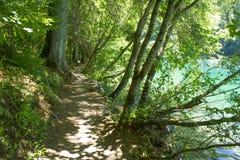 Πορεία στο δάσος, λίμνη Tovel, Trentino Ιταλία Στοκ Εικόνες