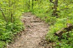 Πορεία στο δάσος μεταξύ των πράσινων δέντρων, ρίζες που κολλούν έξω από τα Η.Ε Στοκ Εικόνες