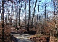 Πορεία στο δάσος το φθινόπωρο στοκ εικόνα με δικαίωμα ελεύθερης χρήσης