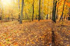 Πορεία στο δάσος φθινοπώρου Στοκ εικόνα με δικαίωμα ελεύθερης χρήσης