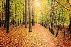 Πορεία στο δάσος φθινοπώρου Στοκ Εικόνες