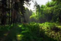 Πορεία στο θερινό δάσος Στοκ φωτογραφία με δικαίωμα ελεύθερης χρήσης