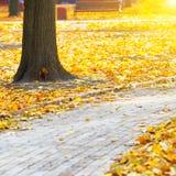 Πορεία στο πάρκο πόλεων φθινοπώρου Στοκ φωτογραφία με δικαίωμα ελεύθερης χρήσης